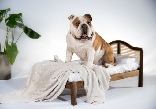 Ruff Ruff Wooden Rattan Pet Bed