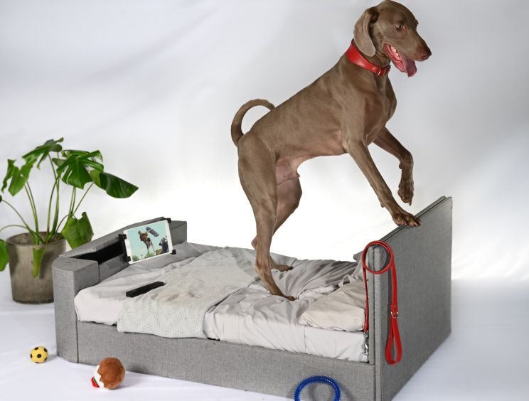 Pup-Vision Upholstered TV Bed