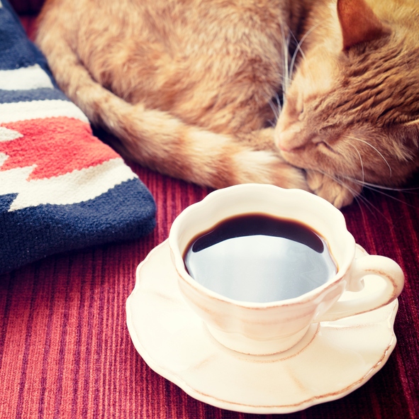 Coffee on Sofa with Cat
